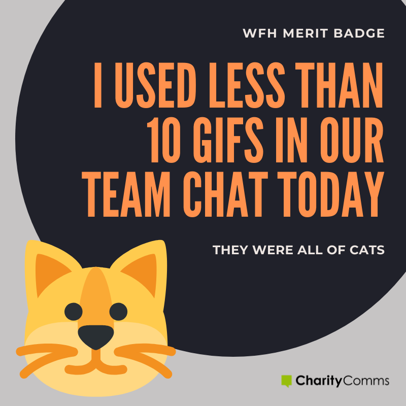 working from home merit badge cat gifs