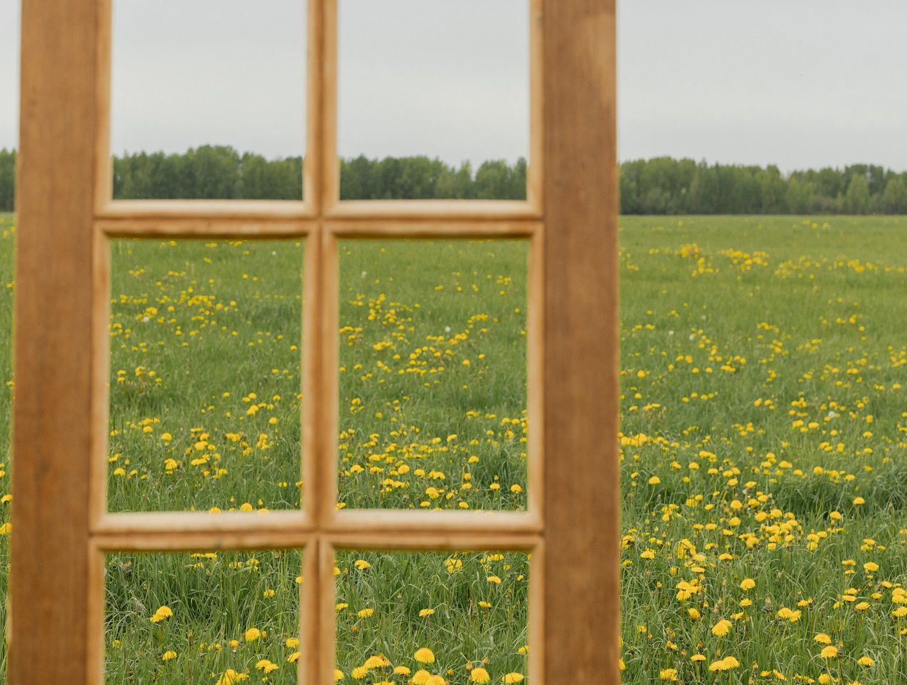 Brown Wooden Framed Glass Window with a meadow in the background. Image by Ron Lach on Pexels.